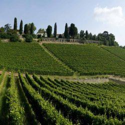 Les vins piémontais